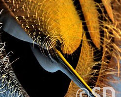 Stachel-Honigbiene