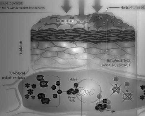 Medizinisch-wissenschaftliche Visualisierung