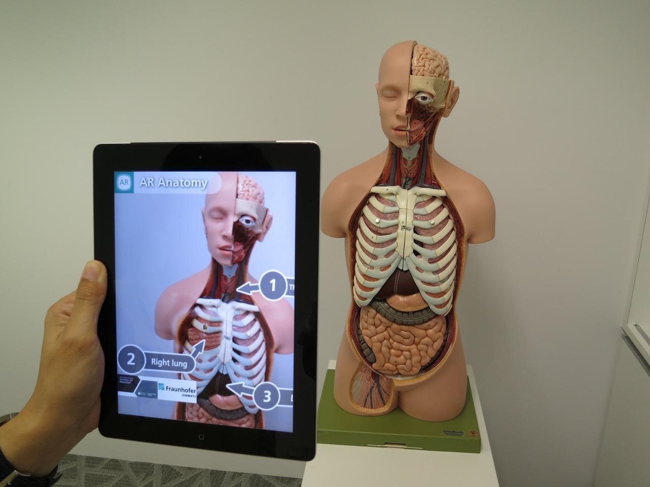 Benutzung Augmented Reality App auf einem Tablett zum Untersuchen eines Anatomie-Modells des Menschen